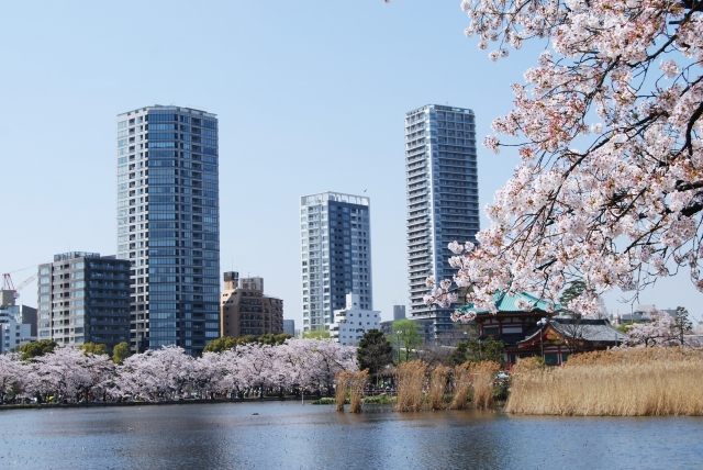 桜の名所 上野